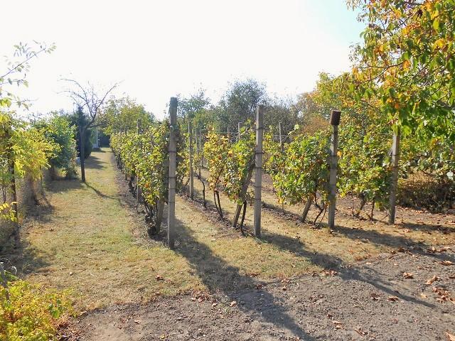 Vinohrad, pohled od vjezdu