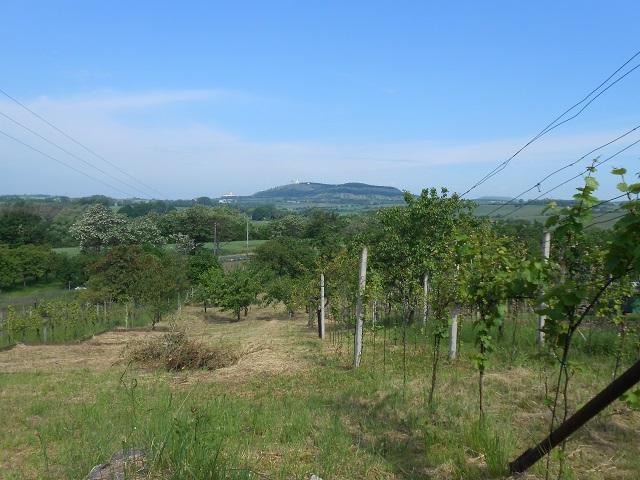 Vinohrad, spodní část zleva