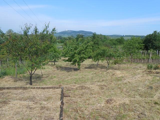 Ovocné stromy vlevo