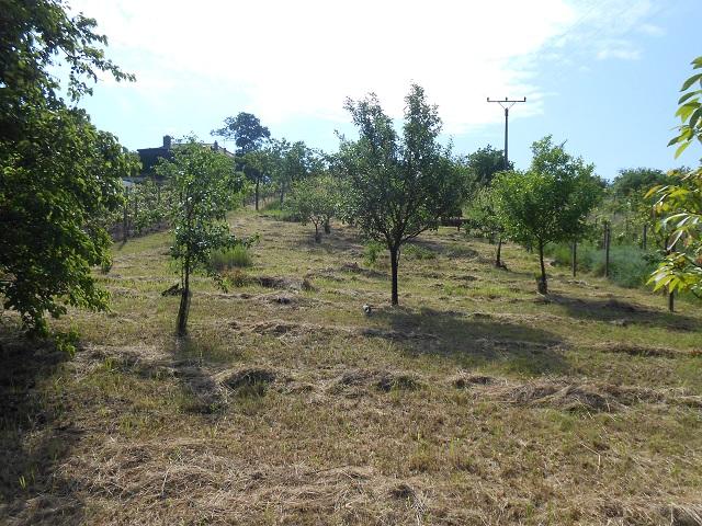 Ovocné stromy zespodu