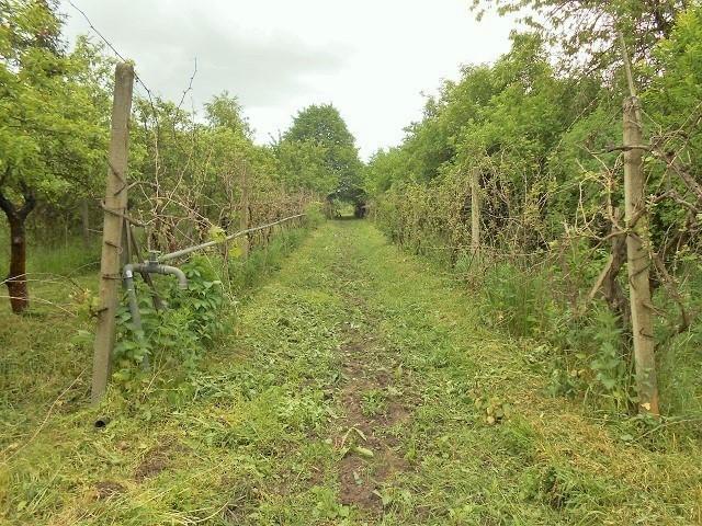Vinohrad, zadní část