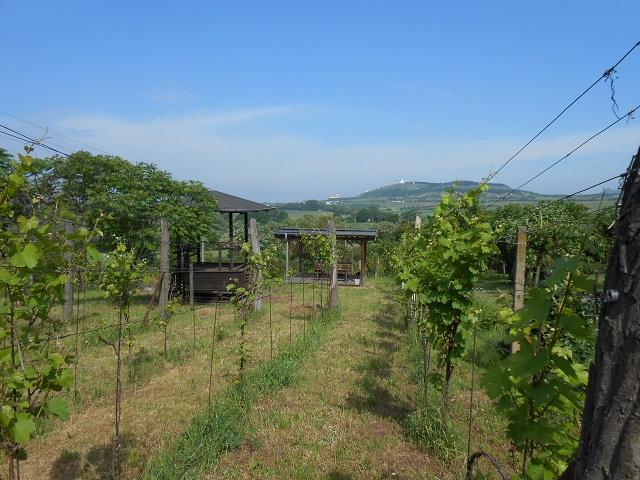 Vinohrad, horní část zprava