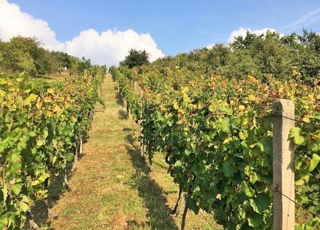 Prodej vinohradu a sadu 2 383 m², Bořetice, Kraví Hora