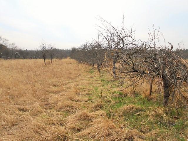 Střední část pozemku od cesty