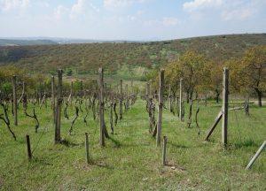 Prodej vinohradu se sadem, 3 418 m², Kraví Hora, Bořetice